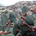 Äthiopien Irobland Reise Kaktusfeigen PRIORI Afrika