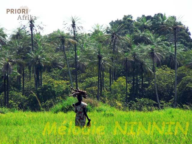 Guinea-Bissau Reisen Reisfeld PRIORI Afrika