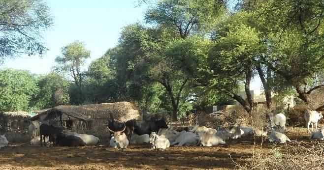 fulani-dorf