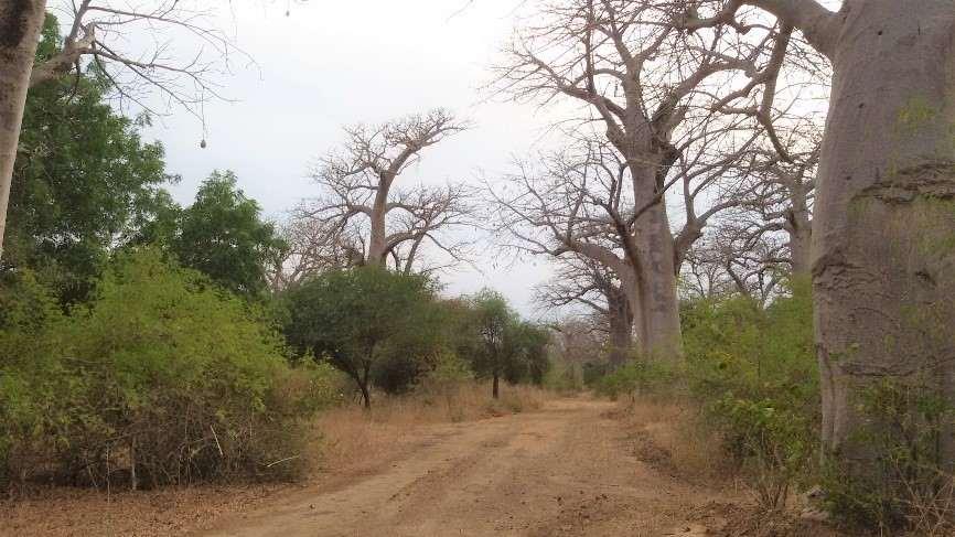 safari im bandia-reservat