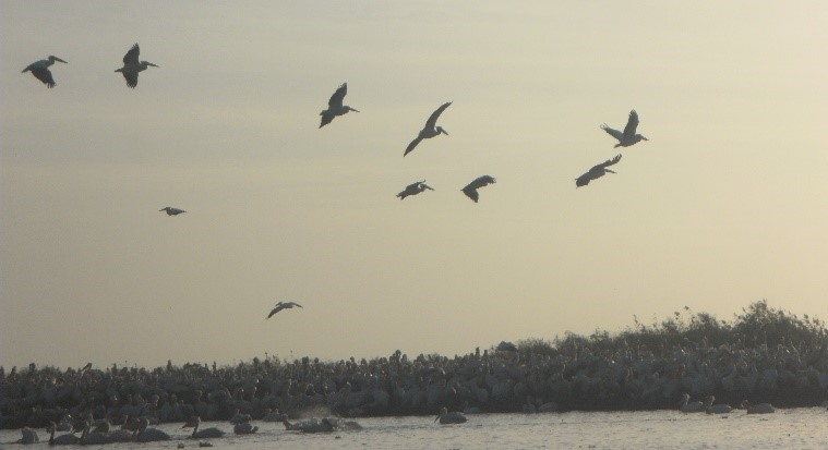 Flussfahrt auf dem Senegal: vögel am fluss-delta