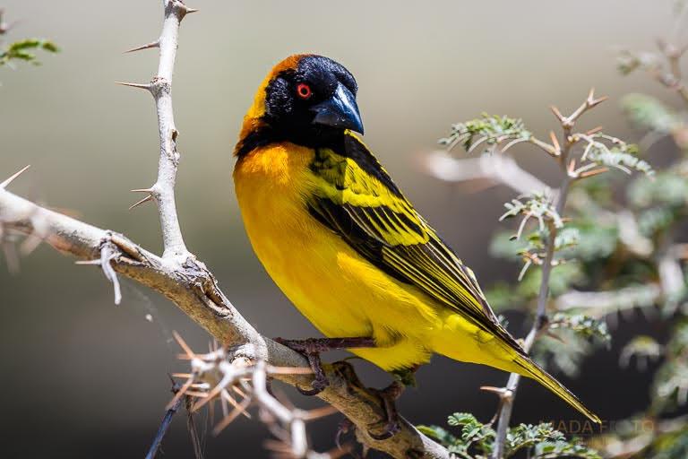 Äthiopien Ornithologie