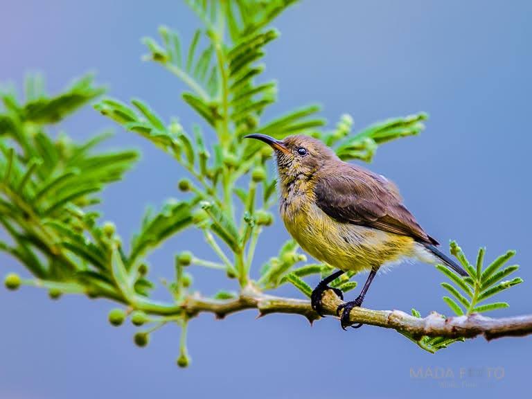 Äthiopien Ornithologie_1